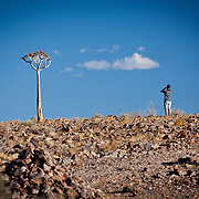 Tom intrigued with the Quiver Tree. Fish River Canyon, Namibia.