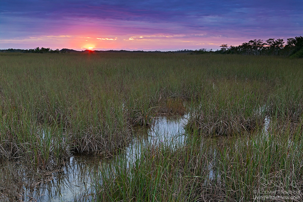 """The sun rises over the Florida Everglades, known as the """"river of grass."""" The Everglades is actually a river - a slow-moving river that's 50 miles wide and averages only six inches deep."""