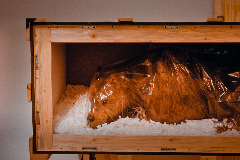Taxidermied bear on the set of High Desert Kill on top of Puye Cliff Dwellings in New Mexico