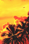 A jetliner soars in an orange sky and above big, fluffy clouds and tropical Miami Beach palm trees.