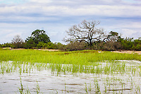 High tide covers marsh grass in a coastal salt water marsh along the Atlantic