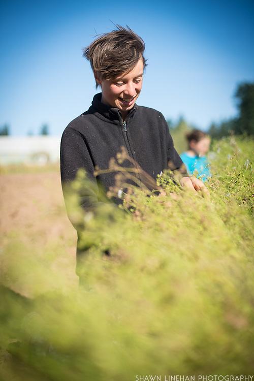 Female farm worker with cilantro and coriander.