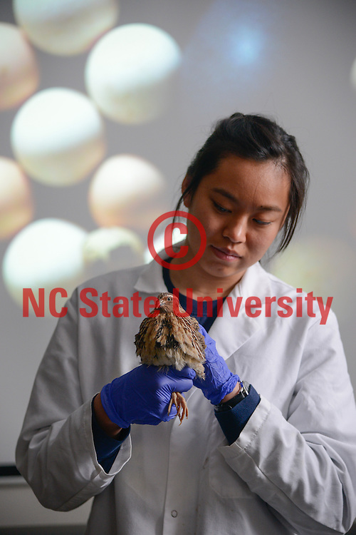 A student works with a quail in a lab in Williams Hall. Photo by Marc Hall