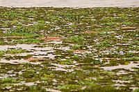 Minas Gerais - Brasil - 15/11/2015 - Rio Doce, atingido pela lama proveniente das barragens da empresa Samarco que romperam em Minas Gerais, provocando mortes de peixes, animais e o desabastecimento nas cidades - Foto: Mosaico Imagem