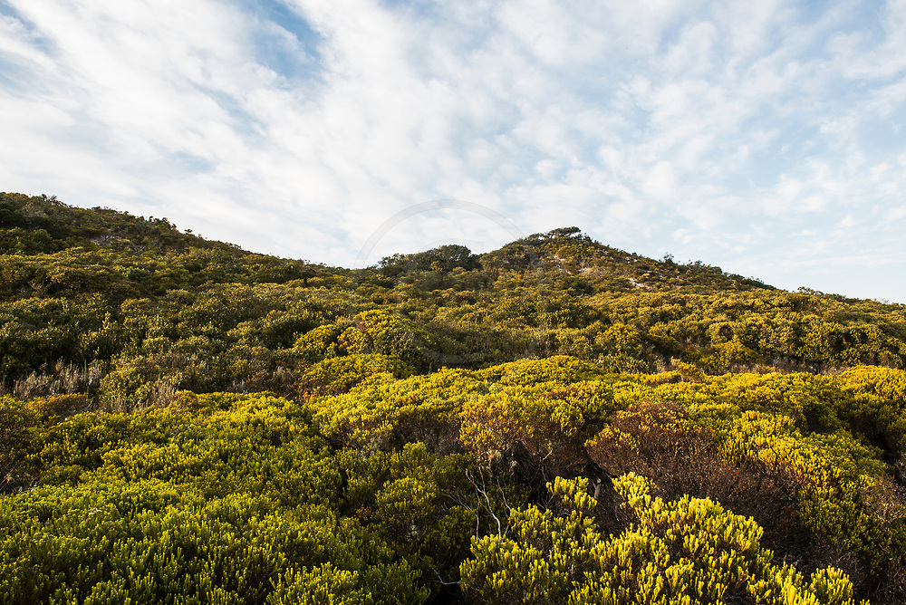 Coastal duneveld vegetation, De Mond Nature Reserve, Western Cape, South Africa