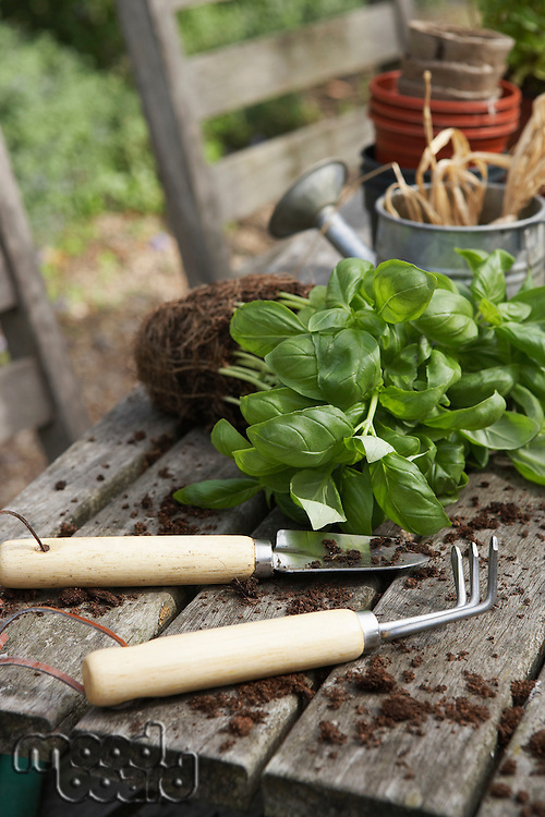 Plant  Gardening Tools and Potting Soil