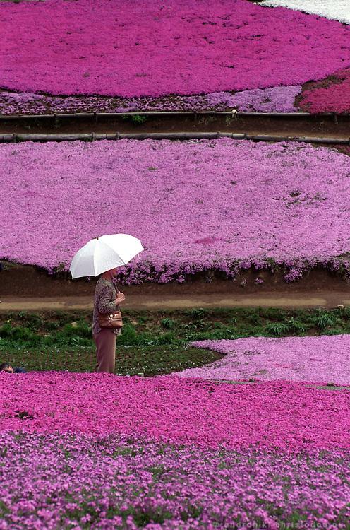Flower viewing in Tsitsibu's gardens