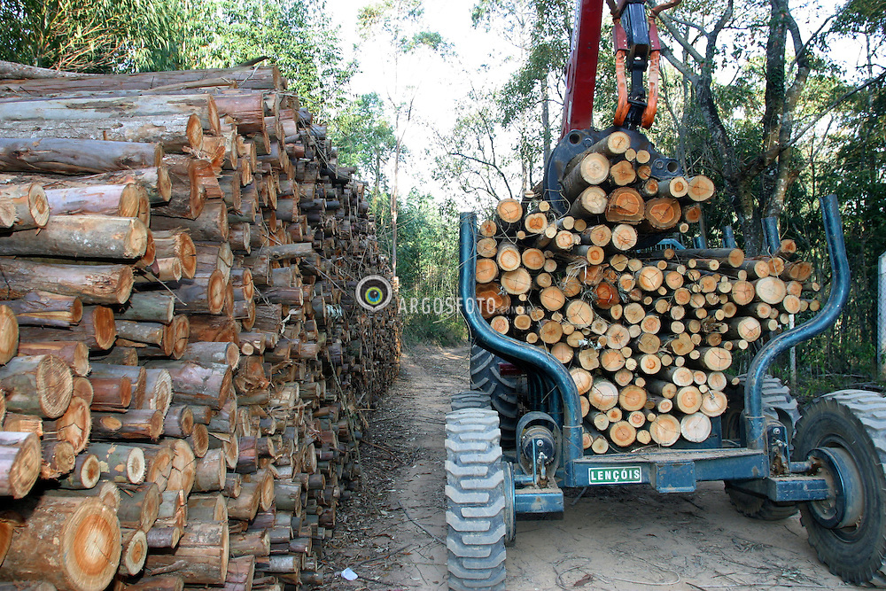 Corte e transporte mecanicos de madeira de eucaliptos para industria extrativa vegetal. / Cut and transportation mechanical of wood of eucalyptus for industry extracting..Foto © Fabio Salles/Argosfoto