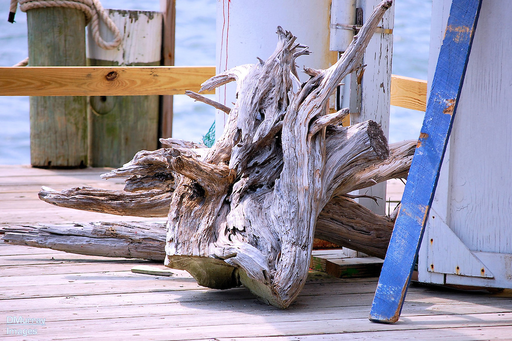 Driftwood, Southport, North Carolina, USA