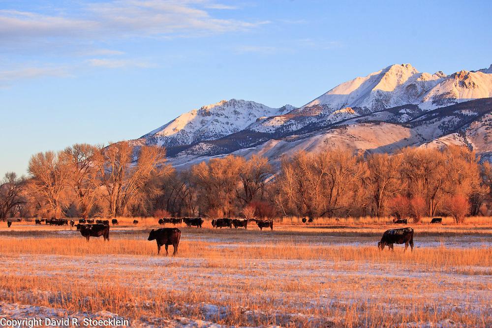 Frost on My Back , 6X Ranch , Mackay, Idaho