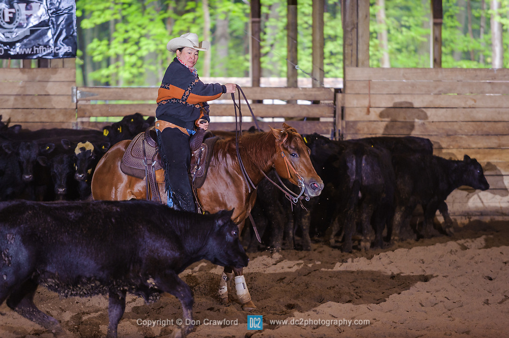 May 21, 2017 - Minshall Farm Cutting 4, held at Minshall Farms, Hillsburgh Ontario. The event was put on by the Ontario Cutting Horse Association. Riding in the 1,000 Amateur Class is Katie Leung on Missancattin owned by the rider.