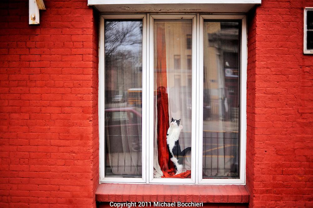 HOBOKEN, NJ - April 06:  A cat is seen in a window on April 06, 2011 in HOBOKEN, NJ.  (Photo by Michael Bocchieri/Bocchieri Archive)