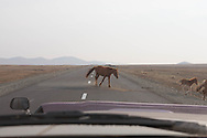 Mongolia. the road to LUN   - Mongolia  /route de Lun   - Mongolie /MNG431
