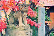 Lion dog in the fall. A small shinto shrine in Hirosaki, northern Japan.