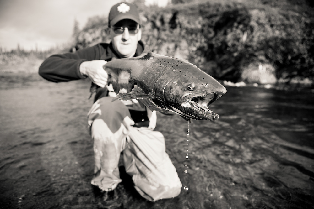 Angler George Rogers holding a fly caught alaskan king salmon, east fork chulitna river, interior Alaska