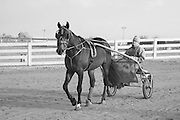 Trainer leaving the track driving in a sulky behind his horse at the Red Mile, Lexington, KY.  Infrared (IR) photograph by fine art photographer Michael Kloth. Black and white infrared photographs