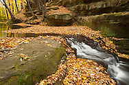 Fallen leaves accumulate around a small waterfall in Pewit's Nest State Natural Area, Wisconsin. This is the first of 3 waterfalls on Skillet Creek as it flows through this deep and narrow gorge.