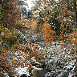 Snow fell in Keystone in the Black Hills of South Dakota in October 2005. (Christina Paolucci, photographer)