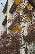 Capitol Hill, Washington, DC, Eastern Market, Hine Junior High, Fall, Leaves