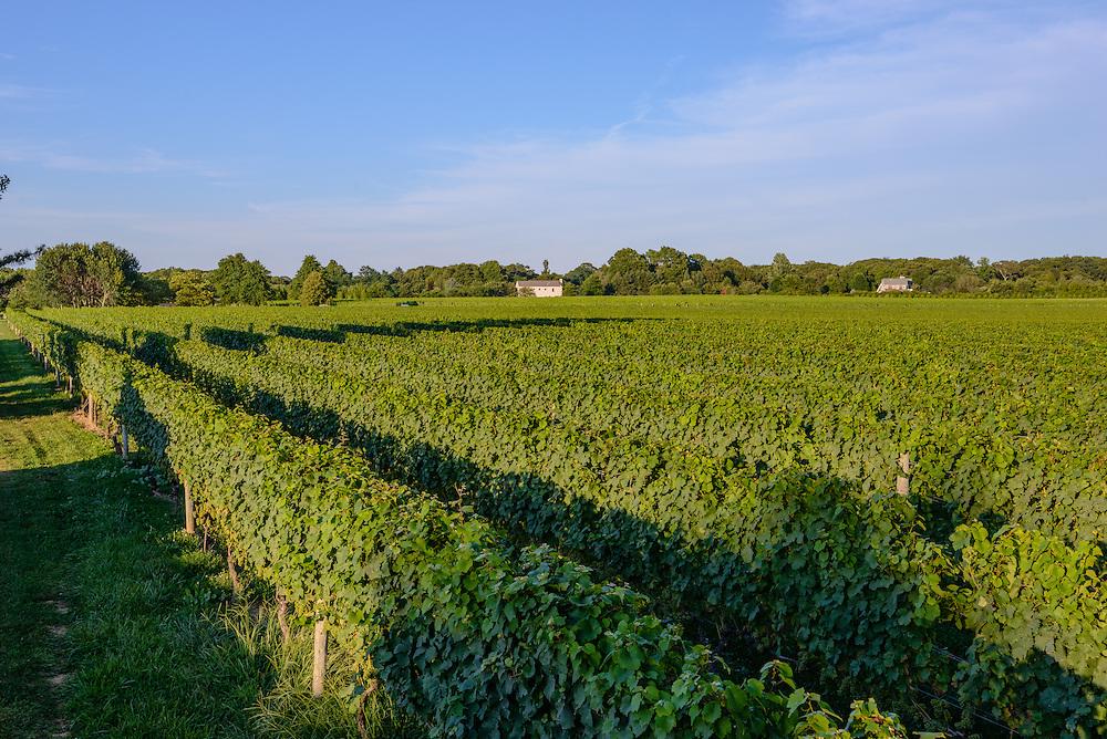 Peconic Bay Winery, Cutchogue, Long Island, NY