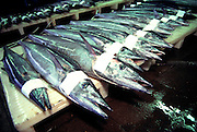 Ono (wahoo), Suisan Fish Market, Hilo, Island of Hawaii<br />