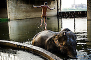 16th May 2014, Yamuna River, New Delhi, India. A mahout jumps from one elephant to another under a bridge in the Yamuna River, New Delhi, India on the 16th May 2014. <br /> <br /> Elephant handlers (Mahouts) eke out a living in makeshift camps on the banks of the Yamuna River in New Delhi. They survive on a small retainer paid by the elephant owners and by giving rides to passers by. The owners keep all the money from hiring the animals out for religious festivals, events and weddings, they also are involved in the illegal trade of captive elephants.. The living conditions and treatment of elephants kept in cities in North India is extremely harsh, the handlers use the banned 'ankush' or bullhook to control the animals through daily beatings, the animals have no proper shelters are forced to walk on burning hot tarmac and stand for hours with their feet chained together. <br /> <br /> PHOTOGRAPH BY AND COPYRIGHT OF SIMON DE TREY-WHITE<br /> + 91 98103 99809<br /> email: simon@simondetreywhite.com photographer in delhi