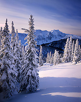 Snow covered trees in the Cariboo Mountains British Columbia