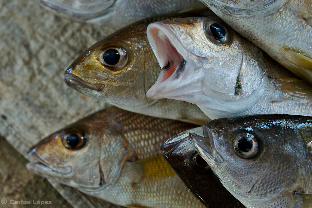 Four fishes on the floor, in of a local market.