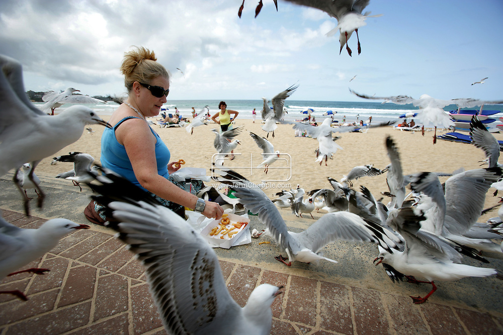 8th February 2007. Sydney, NSW. Siobhan O'Gorman is overwhelmed by seagulls on Manly beach, as she tries to eat her lunch. In a hope to solve the problem there are plans to introduce birds of prey to the busy area. PHOTO © JOHN CHAPPLE / REBEL IMAGES.tel 310 570 9100.john@chapple.biz.www.chapple.biz