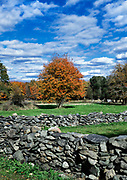 Rustic fieldstone wall and autumn tree, Tiverton, Rhode Island, USA.