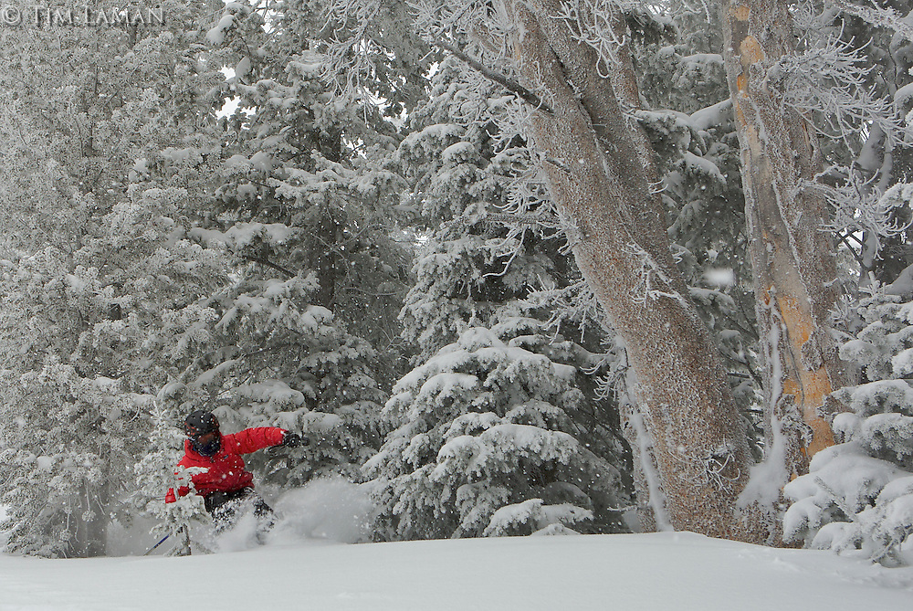 An 8 year old boy emerges from the trees on a fresh powder day somewhere in Jackson Hole, WY