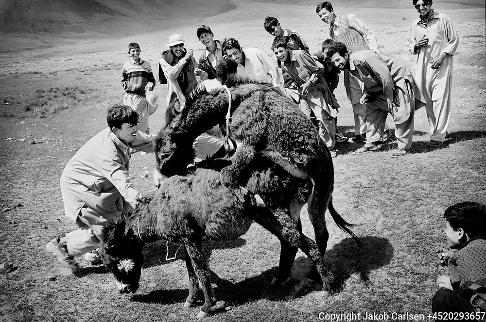 Polotournament at Shandur Pass in Pakistan.<br /> Young men catch donkeys and make them have sex. For them it&acute;s like a porn movie.