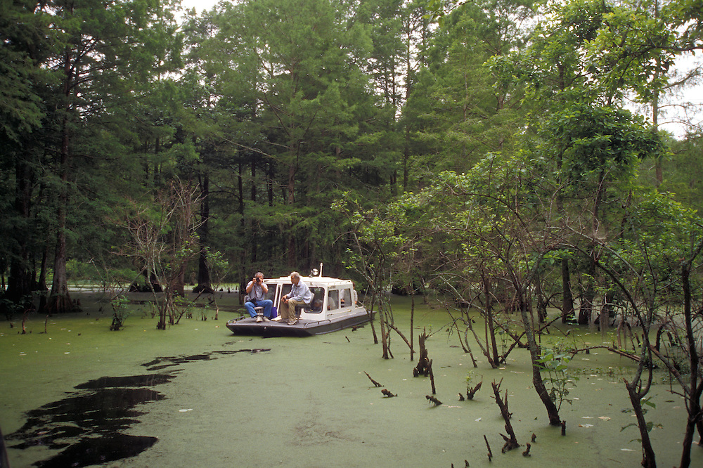 Beaux Bridge:  Boat tours take visitors deep into the murky and algae-covered waters of the Atchafalaya swamp.<br />