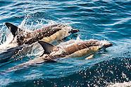 New Zealand Hauraki Gulf
