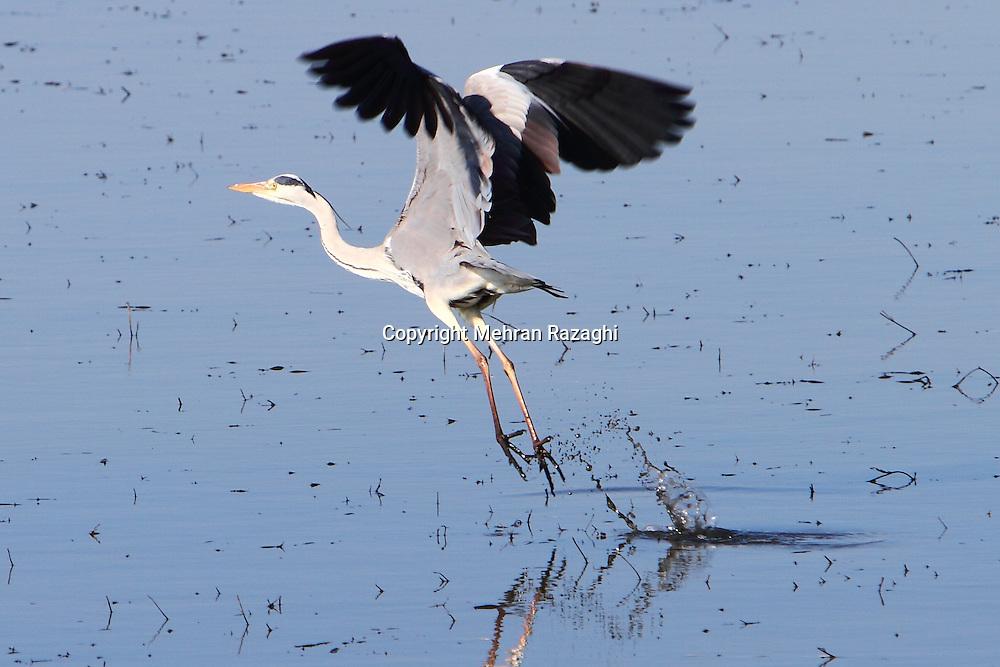 Birds of Evros Delta in Greece
