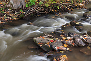 Fall Leaves on the rocks in Fortune Creek.  Photographed during Fall Rhapsody at Gatineau Park in Gatineau, Québec, Canada.