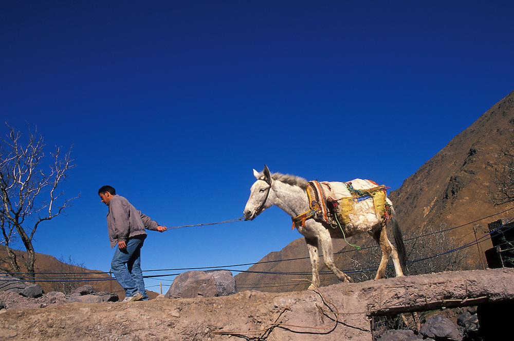 Trekking mule is led across a bridge at Imlil in the High Atlas.