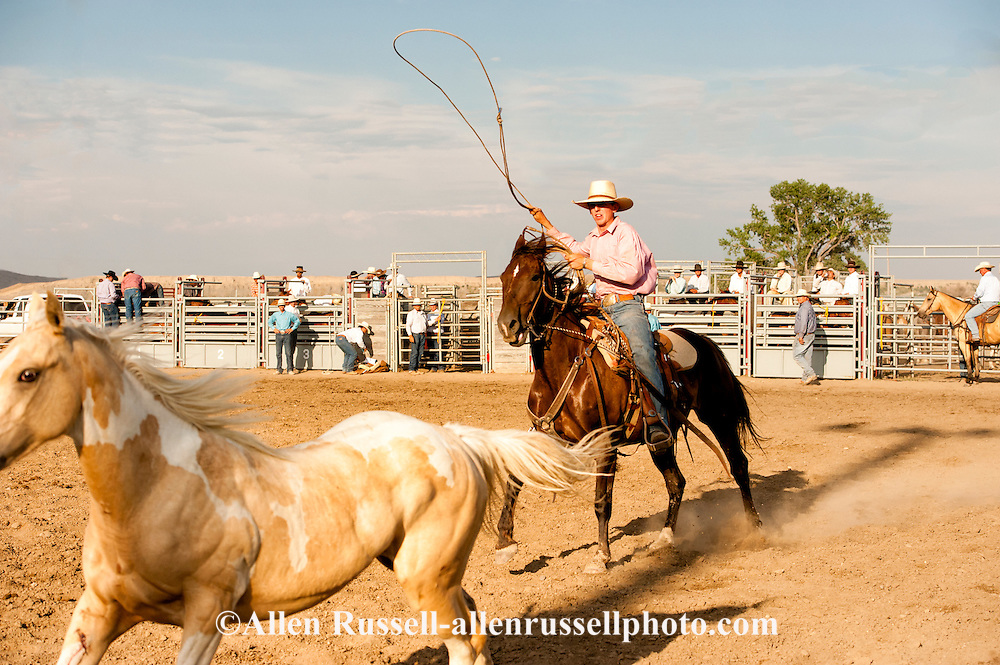 Will James Roundup, Ranch Rodeo, Wild Horse Roping, Caleb French, Hardin, Montana.