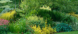 Summer border at Glen Chantry. Carex elata 'Aurea', Matteuccia struthiopteris, hostas, astilbes and Astrantia 'Roma'
