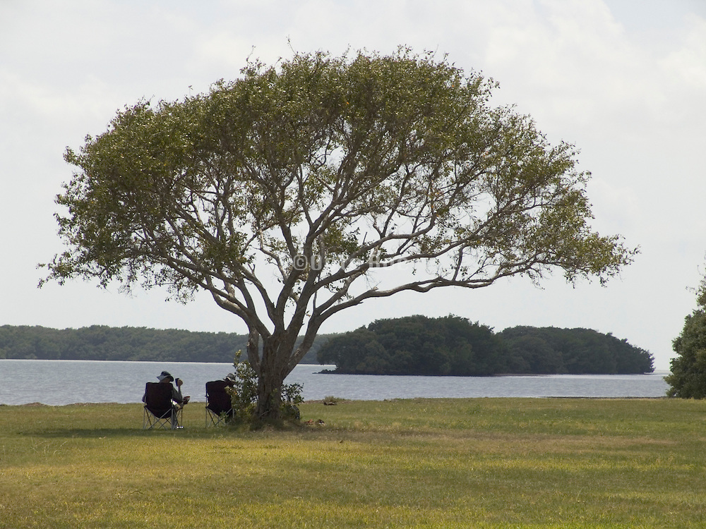 two people under the shade of a tree enjoy the view Everglades Florida