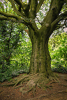Tree, Parliament Hill, Hampstead Heath park - London, England, 2016