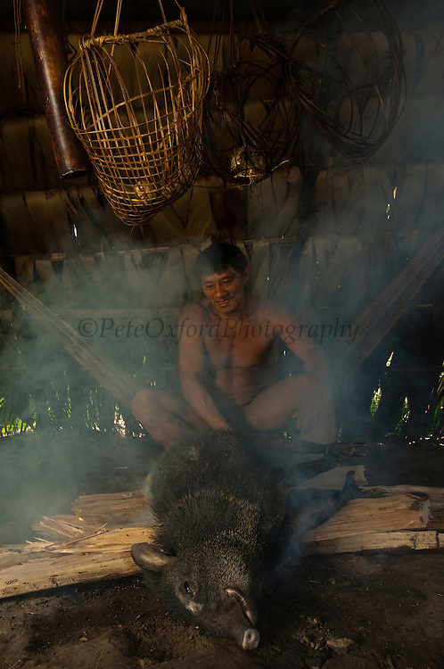 Huaorani Indian - Ontagamo Kaimo cooking a peccary that he hunted for food. Gabaro Community. Yasuni National Park.<br /> Amazon rainforest, ECUADOR.  South America<br /> They first singe the hair off over the fire, then chop it into pieces for boiling or smoke it in a basket that hangs over the fire.<br /> This Indian tribe were basically uncontacted until 1956 when missionaries from the Summer Institute of Linguistics made contact with them. However there are still some groups from the tribe that remain uncontacted.  They are known as the Tagaeri &amp; Taromenani. Traditionally these Indians were very hostile and killed many people who tried to enter into their territory. Their territory is in the Yasuni National Park which is now also being exploited for oil.