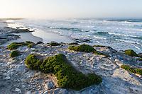 Rugged, pristine coastline at dawn, Arniston, Western Cape, South Africa