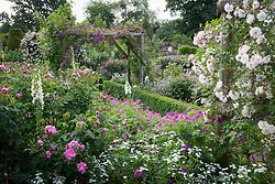 The rose garden at Mottisfont. Rosa 'Adélaïde d'Orléans' and Rosa 'Veilchenblau' on the arches