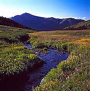 Wildflowers & Creek. Mayflower Gulch & Jacque Peak, Summit County, Colorado