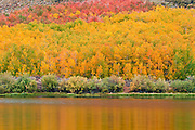 Fall color at North Lake, Inyo National Forest, Sierra Nevada Mountains, California USA