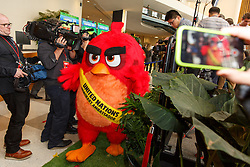 """""""Red"""" from the Angry Birds movie arrives at the """"Angry Birds for a Happy Planet"""" campaign, at the United Nations headquarters in New York, March 18, 2016. UN Secretary-General Ban Ki-moon appointed Red from the Angry Birds as Honorary Ambassador for Green on the International Day of Happiness and encouraged young people to take action on climate change and make the Angry Birds happy. EXPA Pictures © 2016, PhotoCredit: EXPA/ Photoshot/ Li Muzi<br /> <br /> *****ATTENTION - for AUT, SLO, CRO, SRB, BIH, MAZ, SUI only*****"""