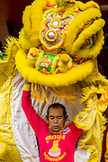 "29 SEPTEMBER 2012 - NAKORN NAYOK, THAILAND: Thai Chinese style Lion dancers perform during observances of Ganesh Ustav at Wat Utthayan Ganesh, a temple dedicated to Ganesh in Nakorn Nayok, about three hours from Bangkok. Many Thai Buddhists incorporate Hindu elements, including worship of Ganesh into their spiritual life. Ganesha Chaturthi also known as Vinayaka Chaturthi, is the Hindu festival celebrated on the day of the re-birth of Lord Ganesha, the son of Shiva and Parvati. The festival, also known as Ganeshotsav (""festival of Ganesha"") is observed in the Hindu calendar month of Bhaadrapada, starting on the the fourth day of the waxing moon. The festival lasts for 10 days, ending on the fourteenth day of the waxing moon. Outside India, it is celebrated widely in Nepal and by Hindus in the United States, Canada, Mauritius, Singapore, Thailand, Cambodia, Burma , Fiji and Trinidad & Tobago.      PHOTO BY JACK KURTZ"