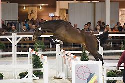 090 - Charon<br /> Hengstenkeuring BWP - Azelhof - Koningshooikt 2015<br /> ©  Dirk Caremans