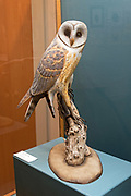 """Barn Owl, 1976."" Bird carving by Wendell Gilley"